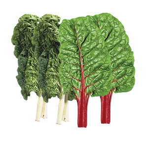 404586_Swiss_Chard_Green_Red20200218.jpg