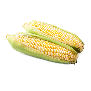 449229_Bi-Colour_Corn20210420.jpg