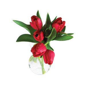 905714_Tulips_Fresh_Cut_Vertical20180108.jpg